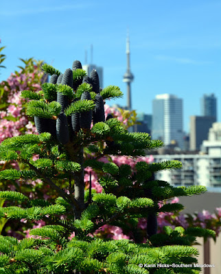 view of Toronto from Hugh Garner Co-op rooftop garden