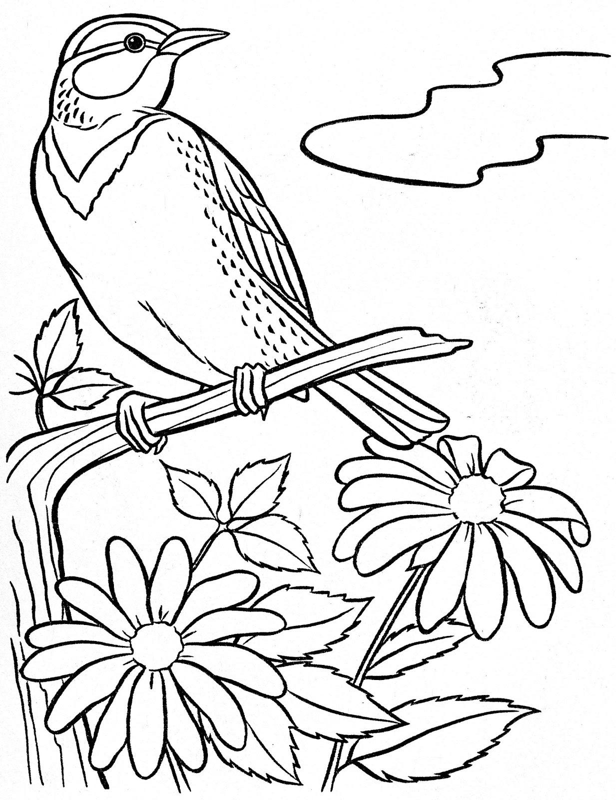 Desenhos Para Colorir P  Ssaros