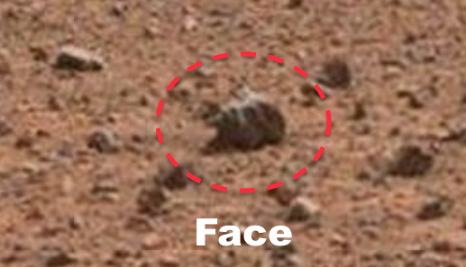 Alien Skull Discovered On Mars 2015, UFO Sightings