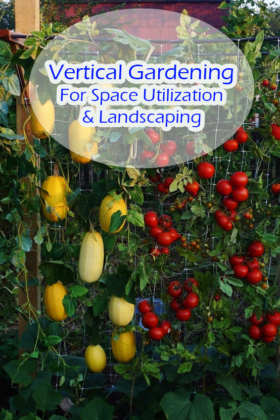 Vertical Gardening For Space Utilization and Landscaping