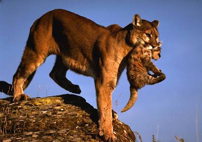 portola valley cougars personals Sldtld 00alondon 00blondon 00clondon 00dlondon 00elondon 00flondon 00glondon 00hlondon 00ilondon 00jlondon 00klondon 00llondon 00mlondon 00nlondon.