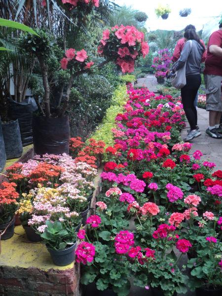 Palabralabra de compras en los viveros de coyoac n for Viveros de plantas