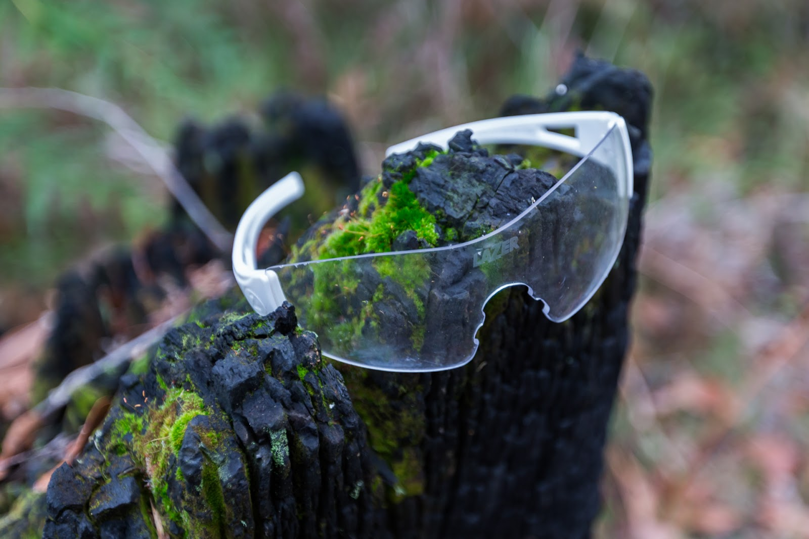 lost glasses on tree stump