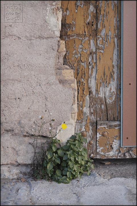 fotografía, Valencia, naturaleza, flor, puerta, serie