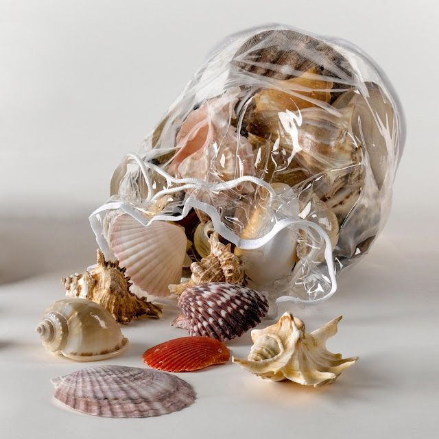 Bag Of Seashells3