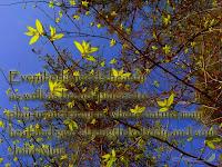 John Muir quote Inspiring Rustic Contemporary Spirit EcoSpirit