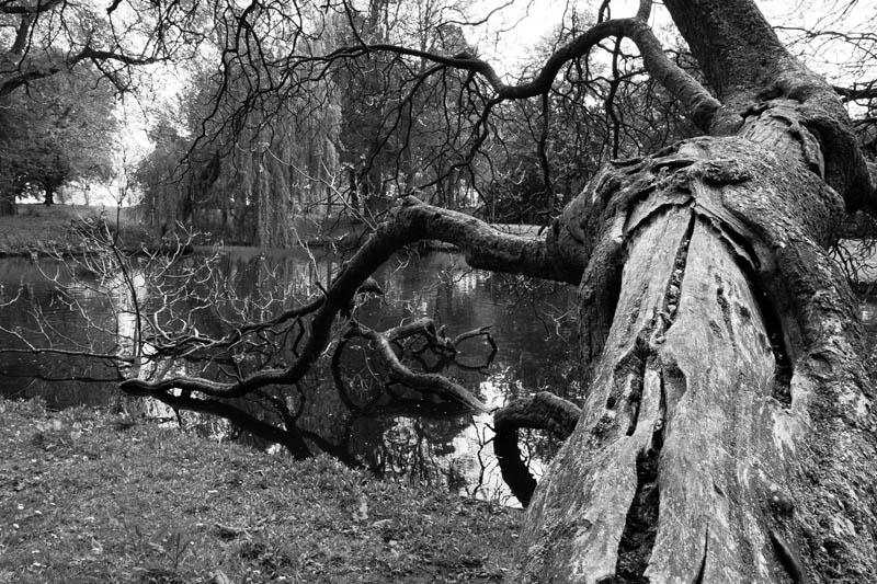 fallen tree in het Park Rotterdam