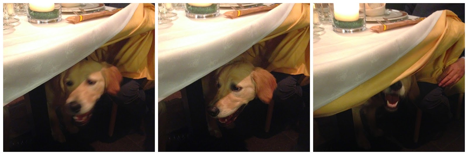 Una cena davvero dog friendly!