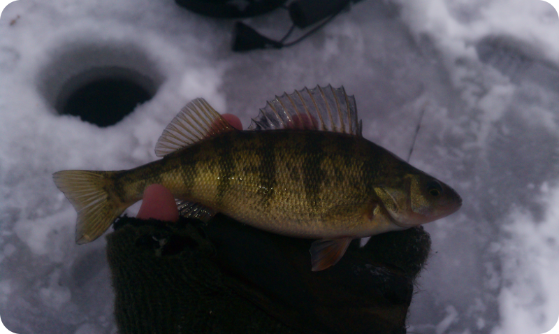 illinois wisconsin fishing long lake ice fishing report