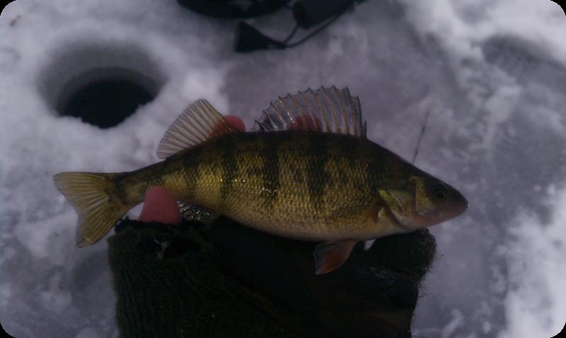 Illinois wisconsin fishing long lake ice fishing report for Illinois ice fishing reports