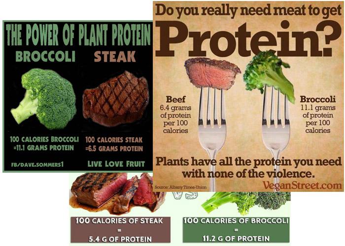 Protein i kött