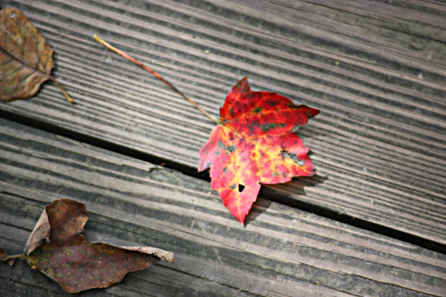 Red maple leaf on wooden board