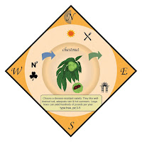 The chestnut card for the Food Forest Permaculture card game