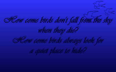 Birds - Elton John Song Lyric Quote in Text Image
