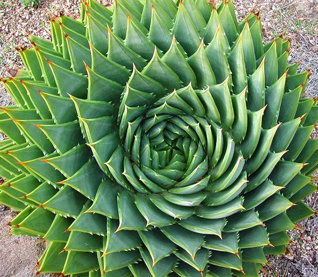 Teresa 39 S Garden Song Propagating Succulents
