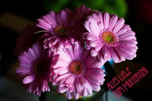 Blumen für Muttertag