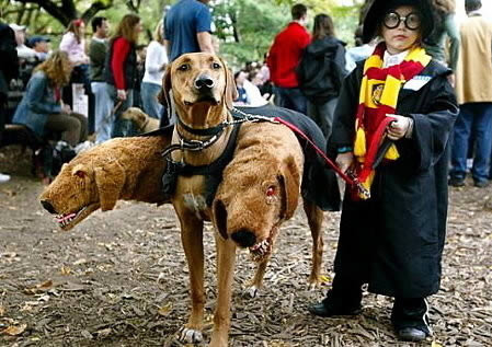 Photos of Hilarious Dogs in Costumes