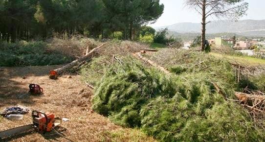 demrede otel yolu için ağaç katliamı