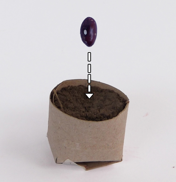 seed starter toilet paper roll,