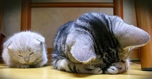 Pentingnya Memilih Partner Bisnis Jual Beli Kucing