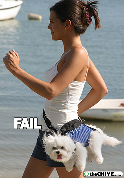 pet-dog-fail-funny-animal-22.jpg