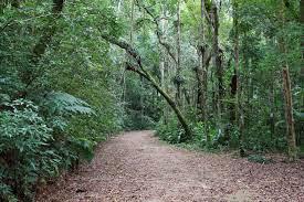 Turismo no Rio de Janeiro trilhas na Floresta da Tijuca