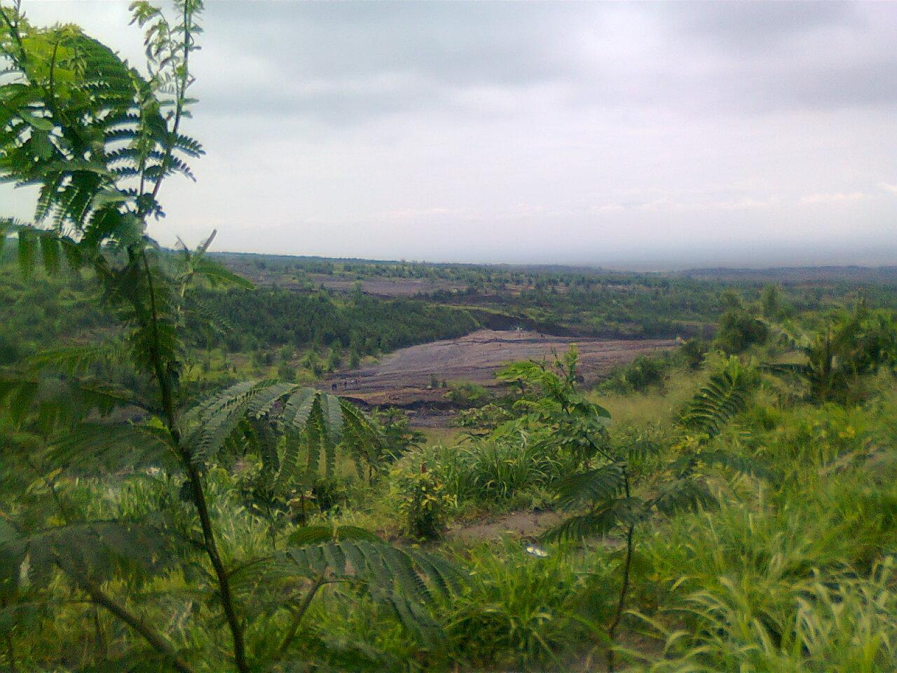 Adenium Merapi 2011