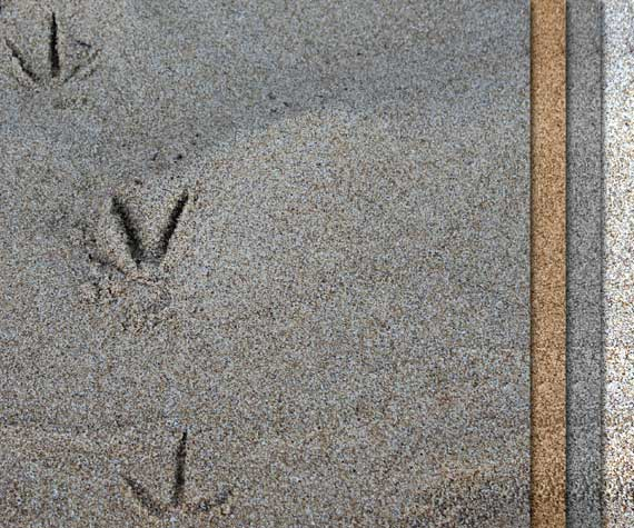 sea gull footprints in the sand in Huatulco, Mexico