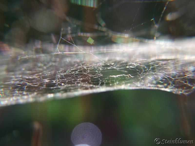 Spinnweben im garten