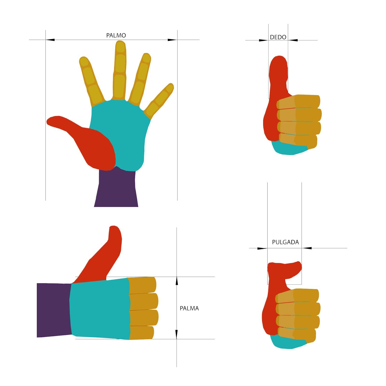 antropometria, mano, infografia