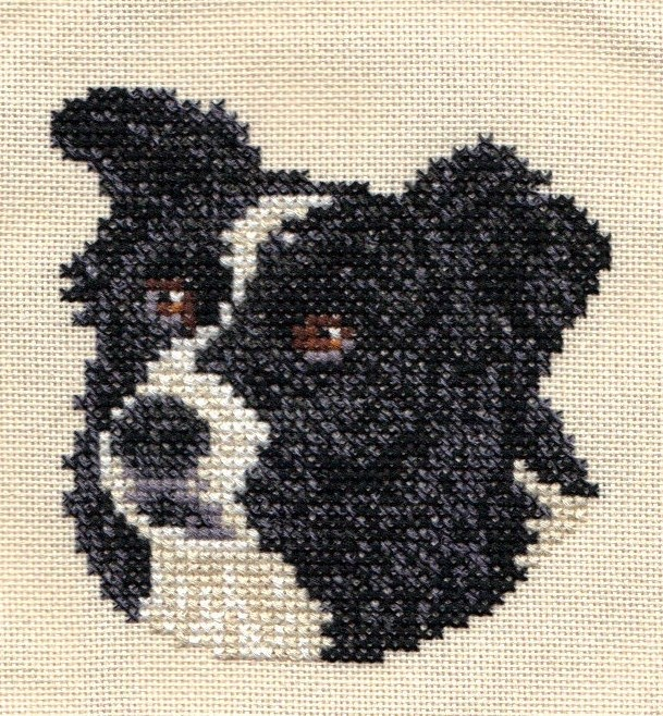 Knitting Pattern For Border Collie : Crafting with dogs