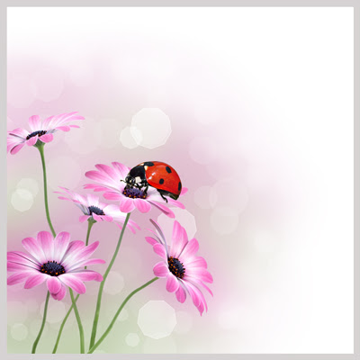 Catarina sobre las flores lilas - Ladybug on flowers