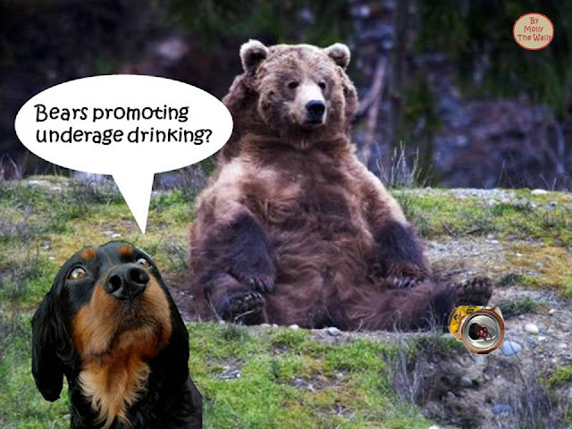 Boozy bears cause mayhem!