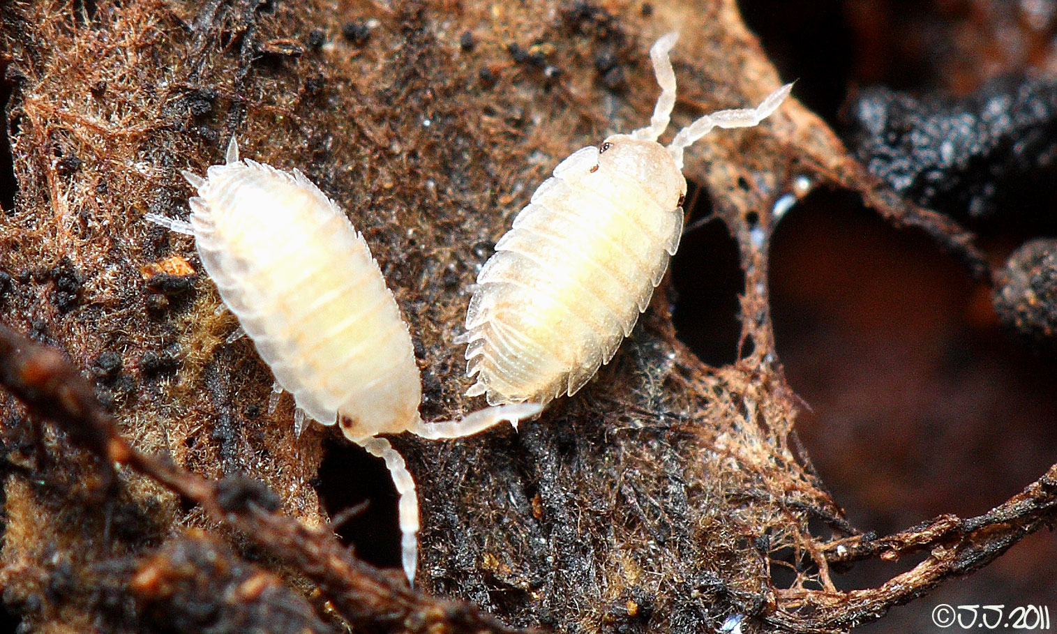 how to look after a woodlouse