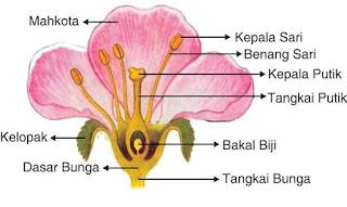 jenis jenis bunga