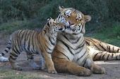 Seatao and cub