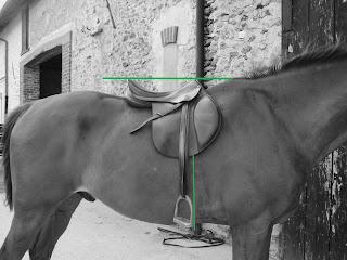 Ajustement de la selle sur le dos du cheval.