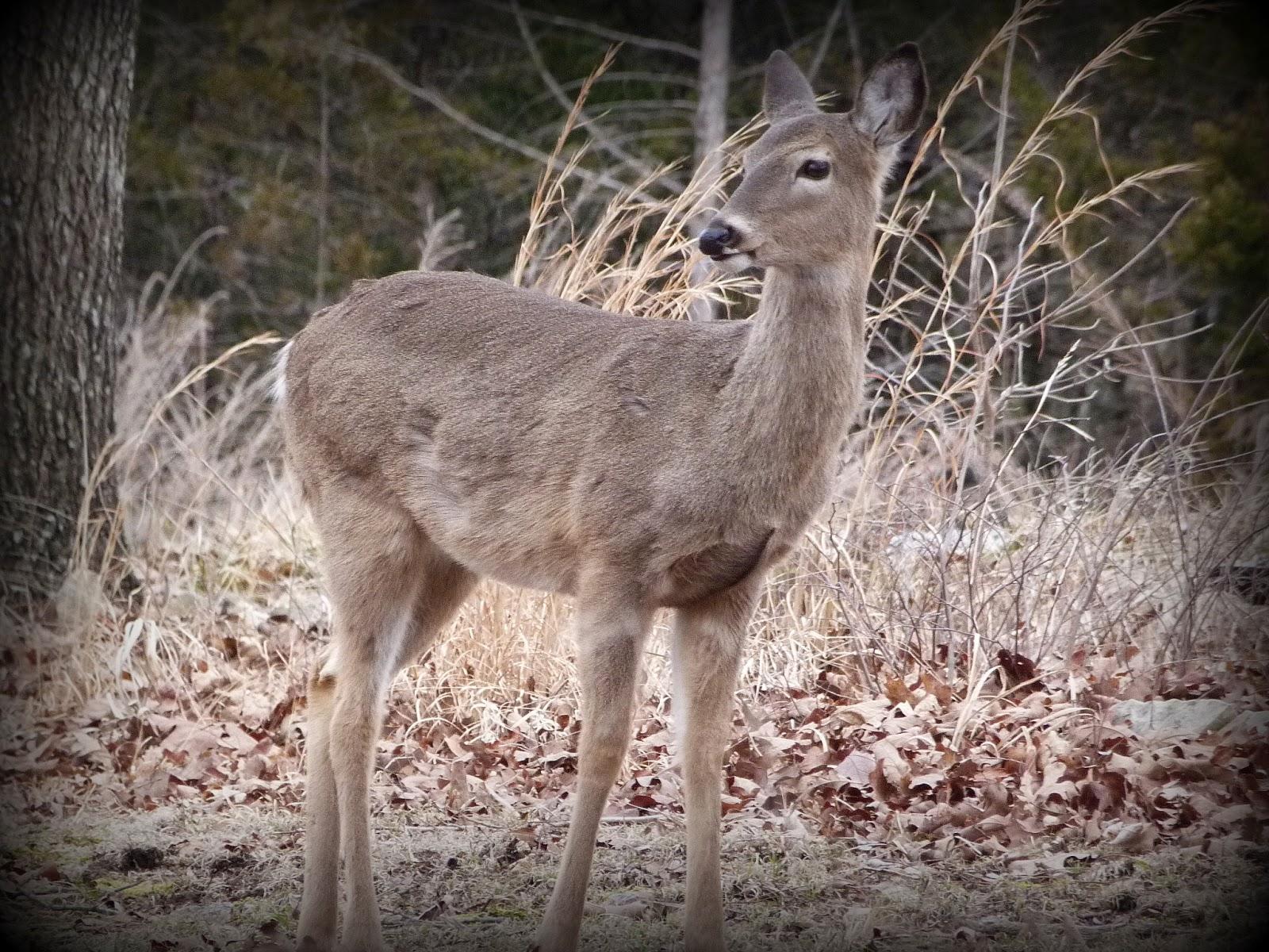 CHMusings: Oh deer, a baby bump