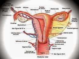 Cara Cepat Menyembuhkan Penyakit Infeksi Rahim