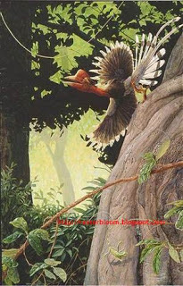 Burung Helmeted Hornbill