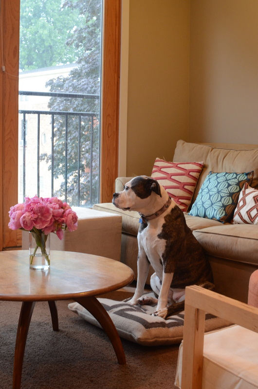 Two Pitties in the City: DoggyStyle: On Floor Pillows vs. Dog Beds