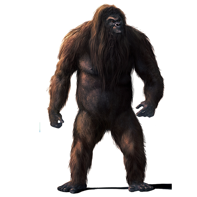 bigfoot We asked matt moneymaker and the bigfoot field researchers organization to count down what they believe to be the strongest pieces of evidence for the existence of bigfoot here are six reasons why a giant ape-like creature may be lurking in the fore.