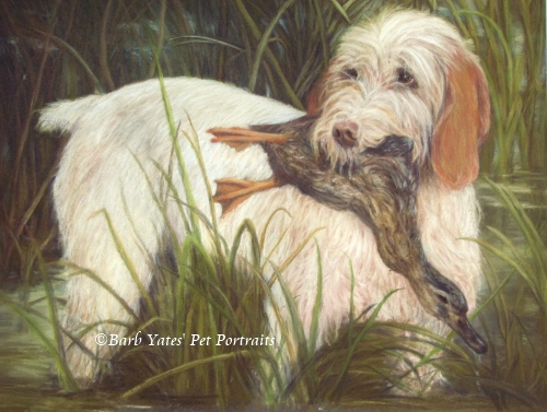 Sporting dog, dog portrait, hunting portrait, duck hunter