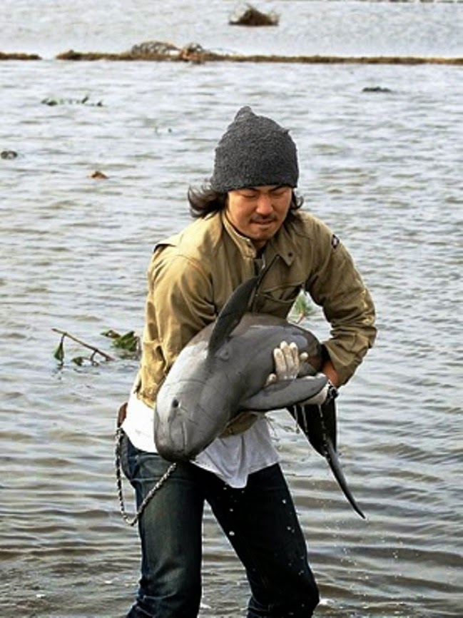 #16. After this helpless porpoise was washed into a rice field by a powerful tsunami, Ryo Taira made his way through the muck and shallow water to save it. - 24 Happy Animal Photos Made Possible By The People Who Saved Them.