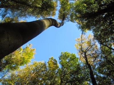 Οι θεραπευτικές ιδιότητες των δέντρων