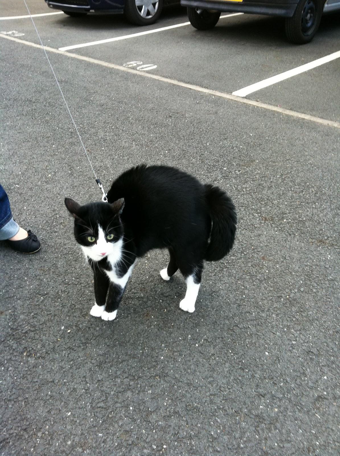 Tout pour mon chat comment communique votre chat - Comment empecher un chat de faire pipi partout ...