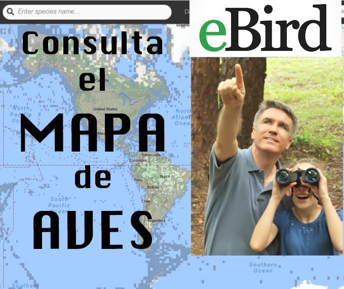 MAPA DE AVES EBIRD