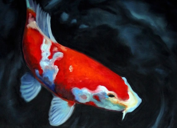 Koi fish fishes world hd images free photos for Koi fish pictures