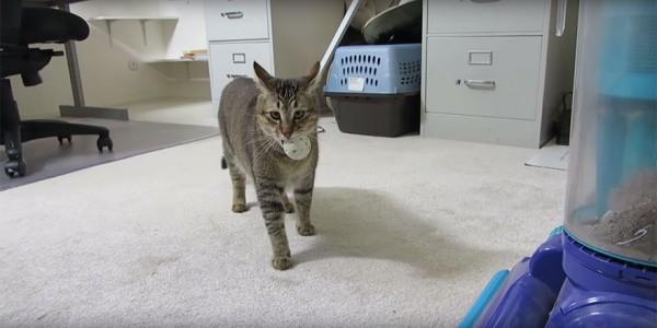 جهاز لإطعام القطط يتطلب أن تصطاد القطة لتأكل