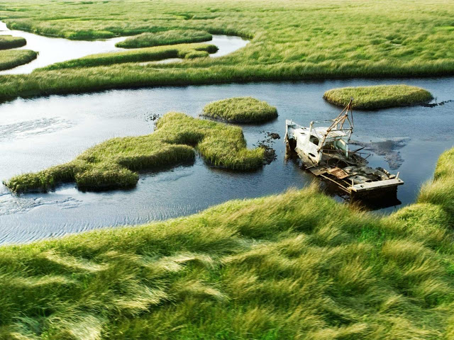 the issue of the threat to floridas everglades habitat loss 2015-10-26 in the everglades,  while loss of habitat would obviously wreak havoc on the ecosystem, scientists are considering another.